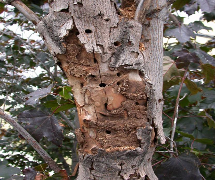 APHIS has a tough job – and deserves praise – Invasive Species